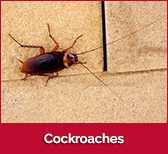 cockroaches-box