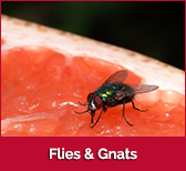 flies-gnats-box