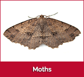 moths-box