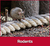 rodents-box