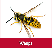 wasps-box
